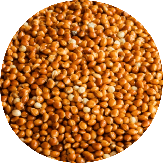 Wholesale Conventional Red Millet image