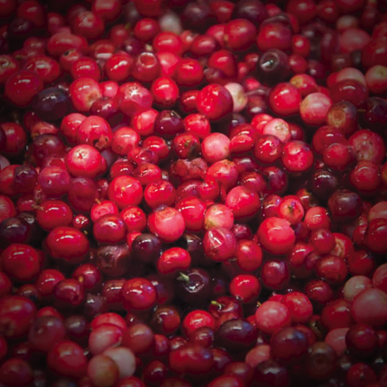 Lingonberry image