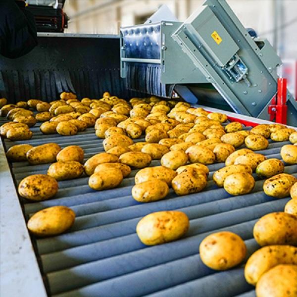 Potato set 6S strictly selected potato wholesale image
