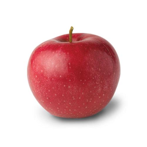 Apple Red Jonaprince image